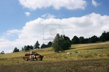 2379687-czech-countryside-with-grazing-cows.jpg