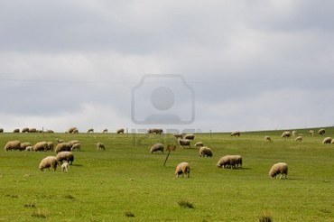 2919419-sheep-pasture-in-beautiful-czech-farmland.jpg